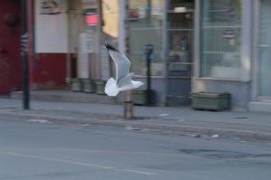 L'oiseau si beau hier s'est envolé