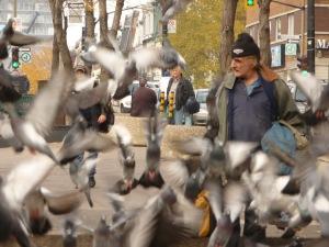 L'ami et le pourvoyeur des oiseaux