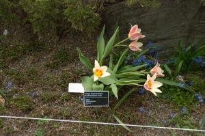 Il y a des fleurs partout pour qui veut bien les voir (Georges-Henri Matisse)