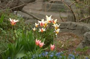 Toutes les fleurs de l'avenir sont dans les semences d'aujourd'hui (proverbe)