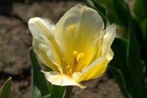 La fleur est courte, mais la joie qu'elle a donnée une minute N'est pas de ces choses qui ont commencement ou fin (Paul Claudel)
