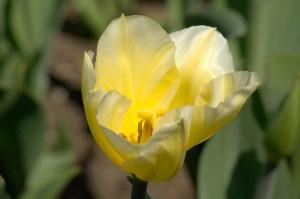 Si la vie n'est qu'un passage, sur ce passage au moins semons des fleurs (Montaigne)