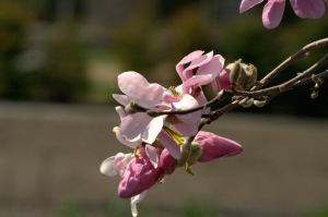 Une fleur est un être entièrement poétique (Novalis)