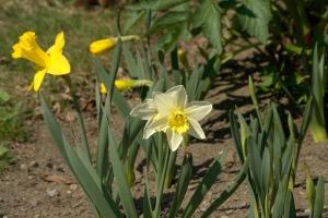 Dans un grain de sable voir un monde Dans chaque fleur des champs le Paradis (William Blake)