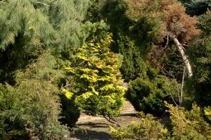 Je ne puis regarder une feuille d'arbre sans être écrasé par l'univers (Victor Hugo)