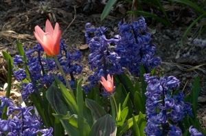 Un grain de poussière ne souille pas une fleur (Rabindranàth Tagore)