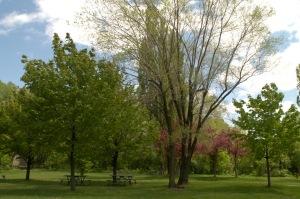 Toute théorie est grise, mais vert florissant est l'arbre de la vie (Goethe)