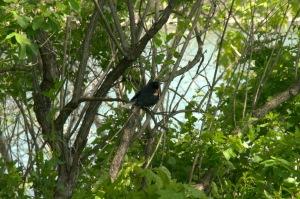 L'oiseau chante comme le lui permet son bec (Proverbe allemand)