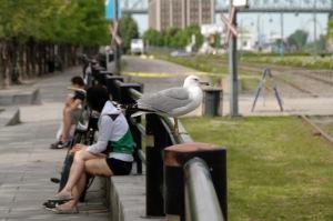 Qui remarque en réalité un oiseau unijambiste?