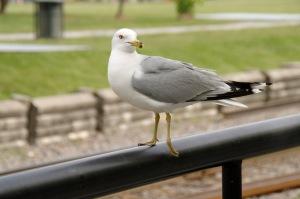 Ma curiosité me poussait à me rapprocher davantage de l'oiseau