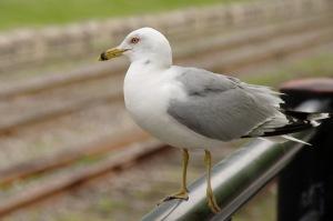 L'oiseau a su garder son équilibre... et sa dignité