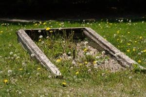 Les fleurs ne sont pas au programme du service des Parcs