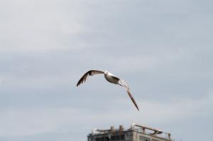 Capter la beauté d'un vol est le fruit d'une patience et ... du hasard!