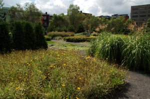 Un petit jardin derrière la Grande Bibliothèque