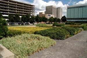 À peine quelques semaines que ce petit jardin a été érigé derrière la Grande Bibliohthèque