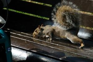L'un d'eux, n'écoutant que son courage, chaparda, si si, une cacahuète tombée sur un banc public