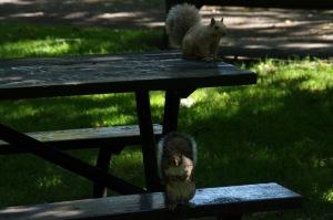 Cette distribution n'a pas échappé à deux petits petits écureuils, hélas en minorité numérique