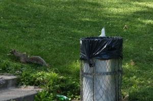 L'écureuil n'a pas cédé aux propos du bipède qui semble singulièrement fâché