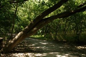 L'inclinaison de cet arbre a de quoi surprendre...