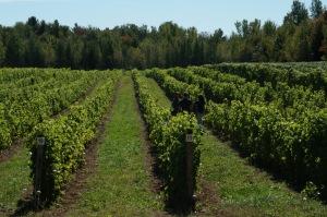 Le vignoble de Véronique Hupin et de Michael Marler est entièrement certifié biologique par Écocert Canada