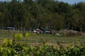 Un guide fait visiter le vignoble en Safari dans les bois et les prés pour voir une variété d'animaux exotiques