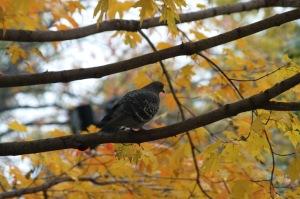 Un oiseau sur ma tête_002