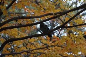 Un oiseau sur ma tête_003
