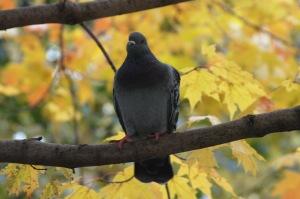 Un oiseau sur ma tête_004