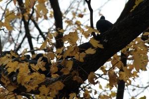 Un oiseau sur ma tête_005