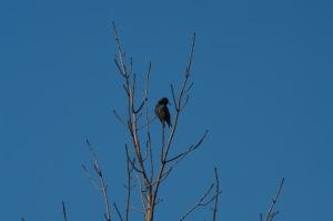Un oiseau sur une branche_001