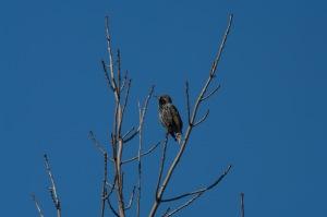 Un oiseau sur une branche_002