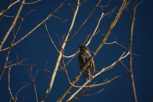 Un oiseau sur une branche_004