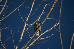 Un oiseau sur une branche_005