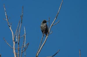 Un oiseau sur une branche_006