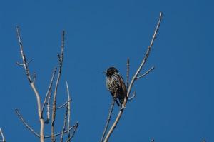 Un oiseau sur une branche_007