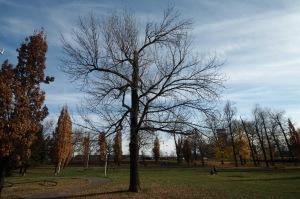 Un parc dans mon quartier_005