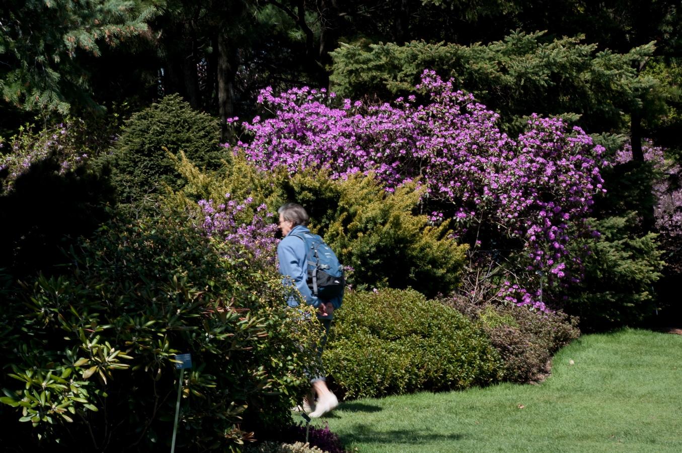 Jardin de fleurs jardin de r ves les beaut s de montr al for Un jardin de fleurs