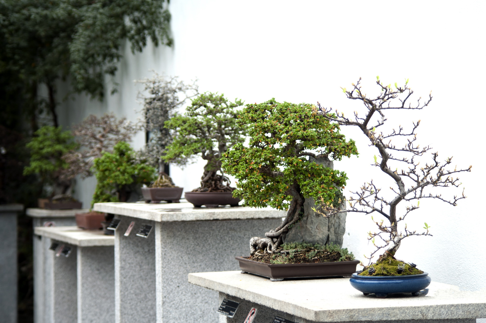 25 f vrier 2011 les beaut s de montr al for Bonsai de jardin