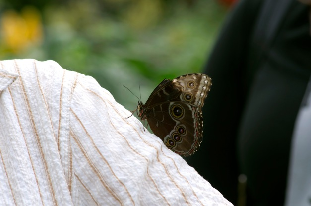 Les papillons de l'hiver
