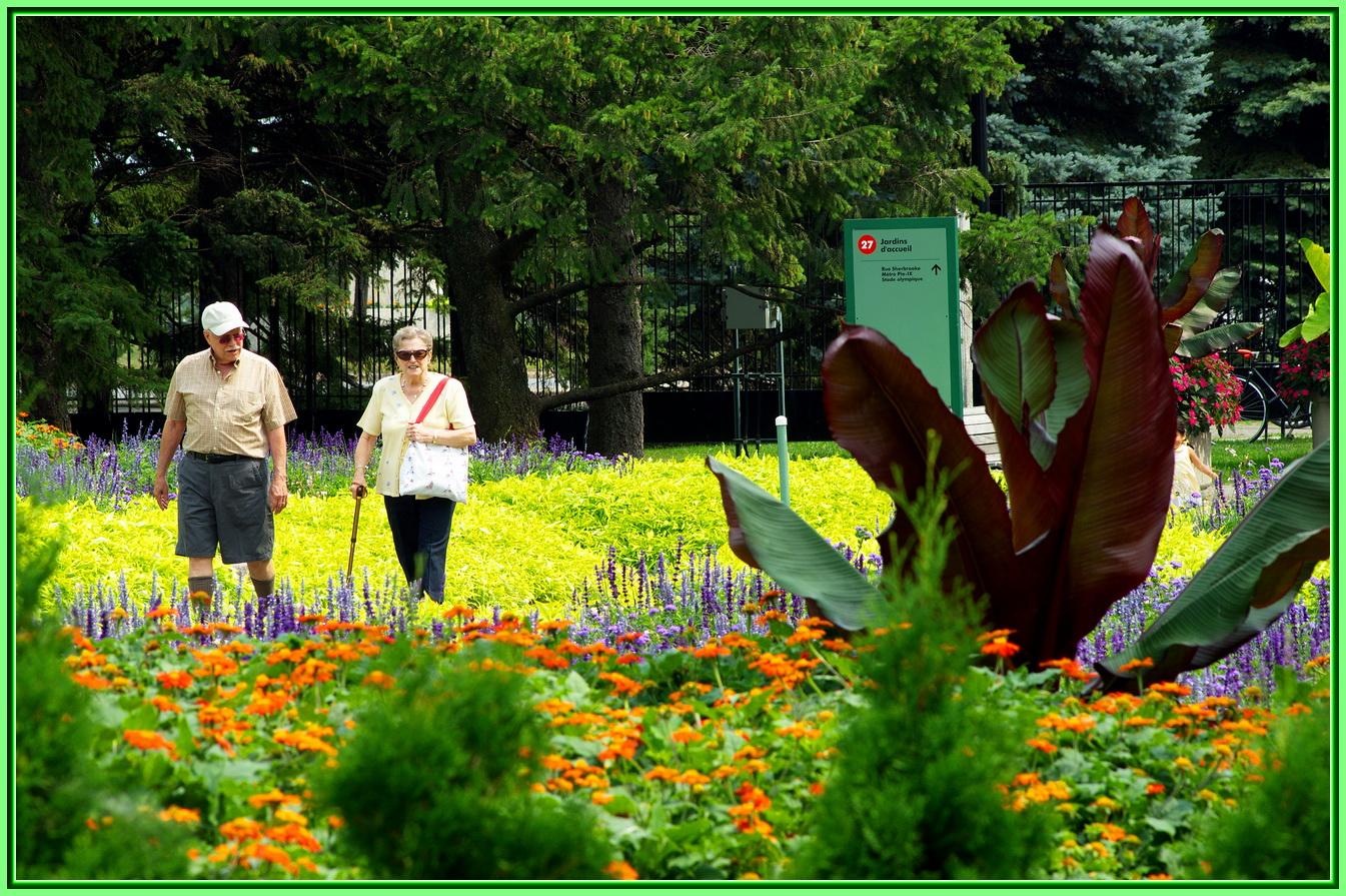 Les g ants du jardin les beaut s de montr al for Au jardin de fanny montreal