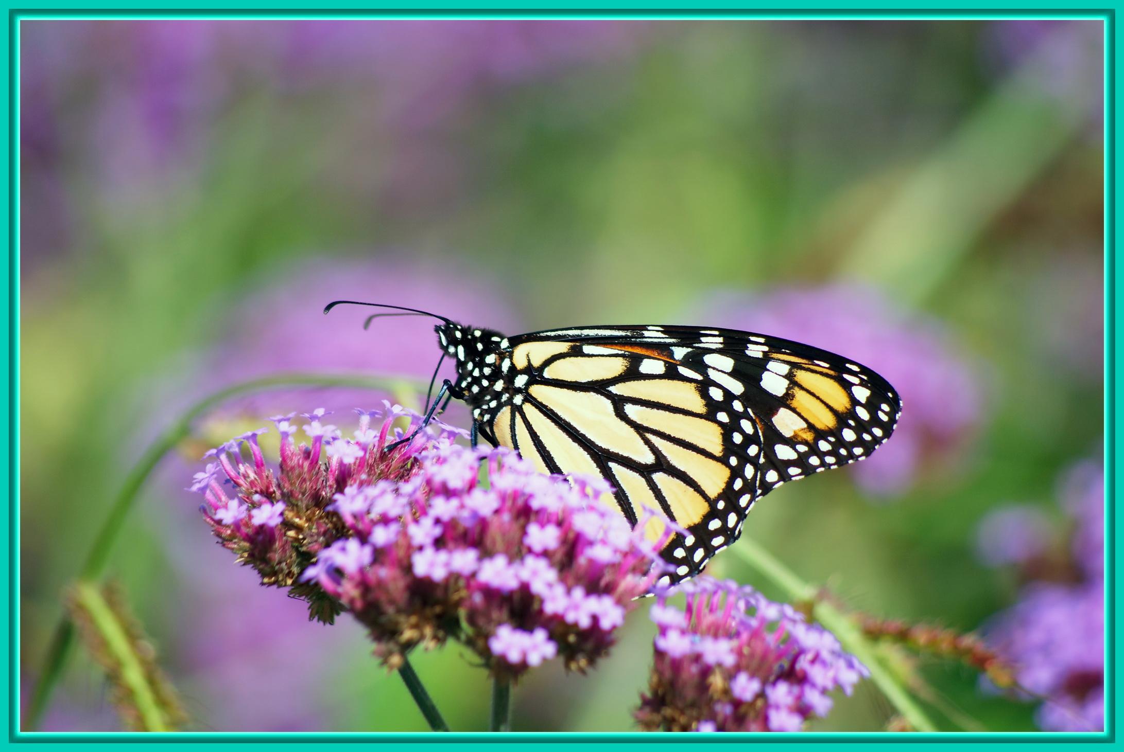 Pin fleur et papillon noir gris sur aisne jade grafic tatouages on pinterest - Tatouage de papillon ...