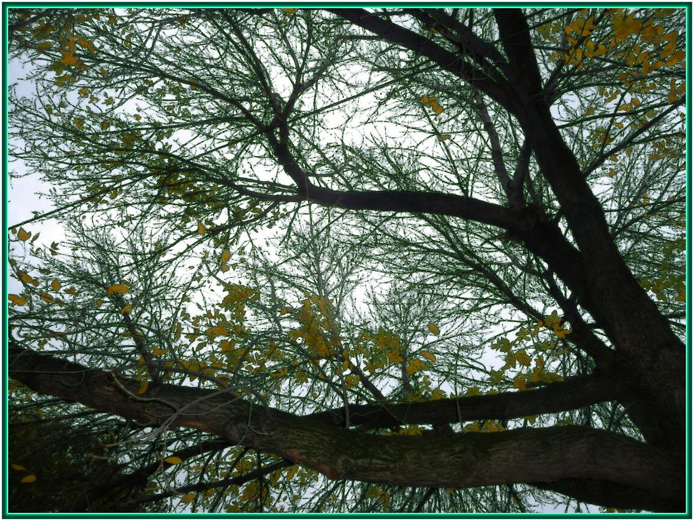 Illusion d'un arbre avec toutes ses feuilles ... (elsa triolet