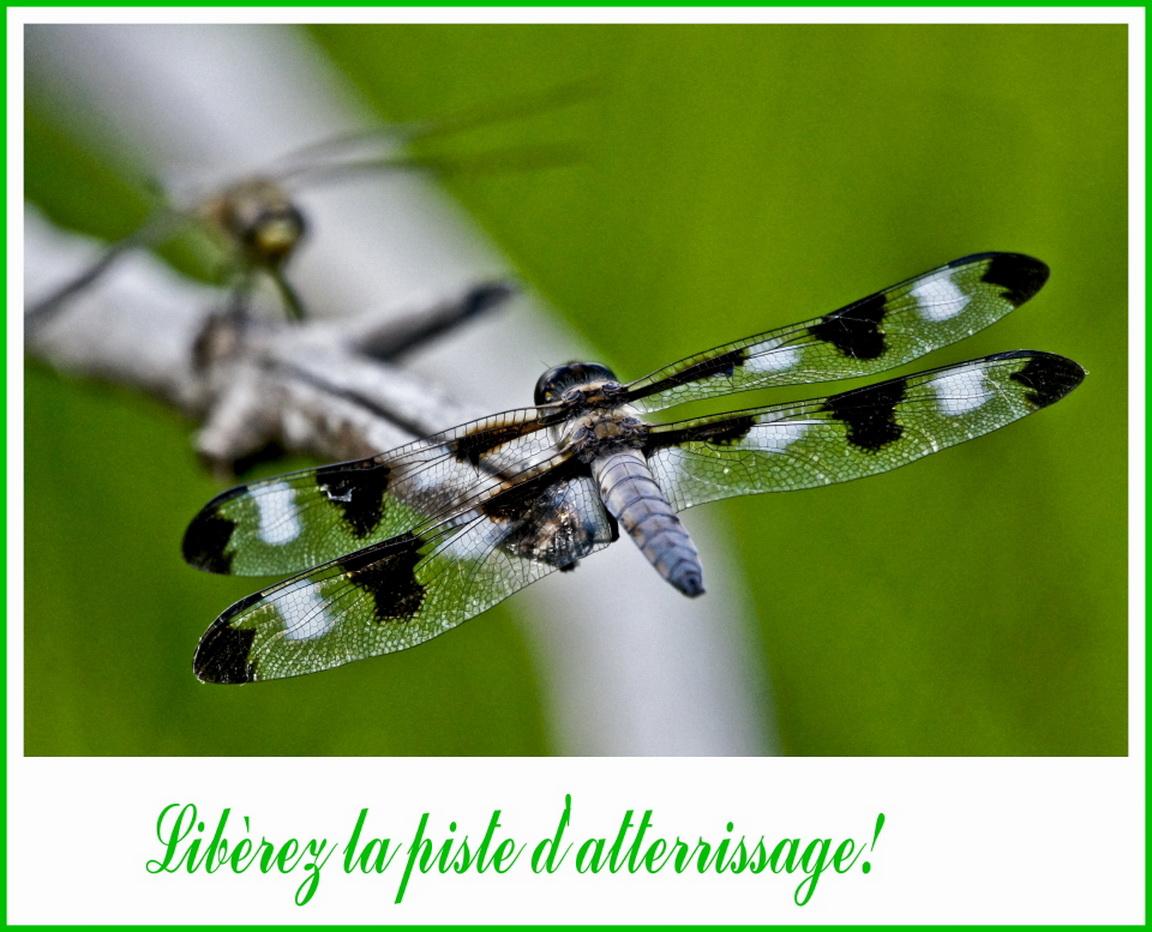 Sc nes de la vie quotidienne chez nos amis les insectes les beaut s de mont - Bien places bien choisis ...