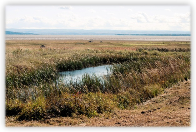 Estuaire du Saint-Laurent et Réserve nationale de faune (RNF) du cap Tourmente
