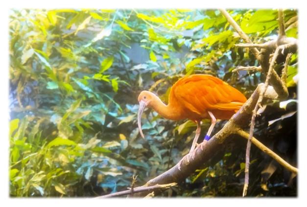 Le Biodôme a attiré quelque 17,3 millions de visiteurs depuis son ouverture en 1992