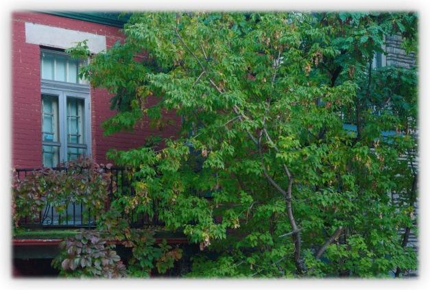 Images des fenêtres, portes et escaliers de Montréal sur un air d'improvisation d'automne