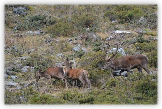Roland Clerc, photographe, dans la forêt des cerfs