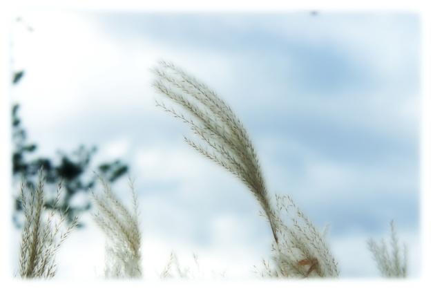 Que dire des noms que portent ces graminées ornementales : Cheveux des anges (Stipa tenuissima), Cœur de Marie doré (Dicentra spectabilis), Elyme des sables (Leymus arenarius), Herbe aux écouvillons (Pennisetum alopecuroides)