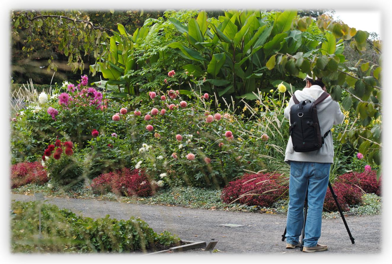 Fleurs les beaut s de montr al for Au jardin de fanny montreal