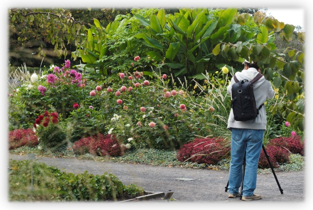 Les amoureux des fleurs se donnent rendez-vous au Jardin botanique de Montréal